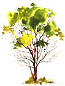Symbols Part 1: Trees and Water - Instructional Video or DVD by watercolor painting artist Tony Couch. Tony Couch has 10 watercolor and art instruction videos, several books on watercolor painting and teaches watercolor workshops across the U.S. and abroad